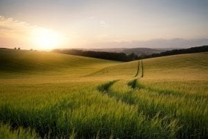 Rolling Hills for Livestock