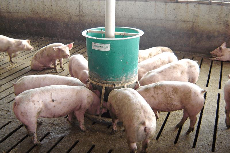 Big Wheel Hog And Pig Feeders