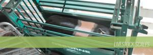 Livestock Scale Header