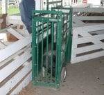 Application of Livestock Scales