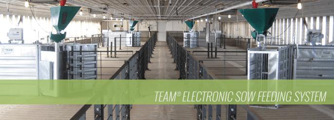 Team Electronic Sow Feeding System