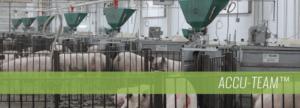 Accu-Team Sow Feeding Systems