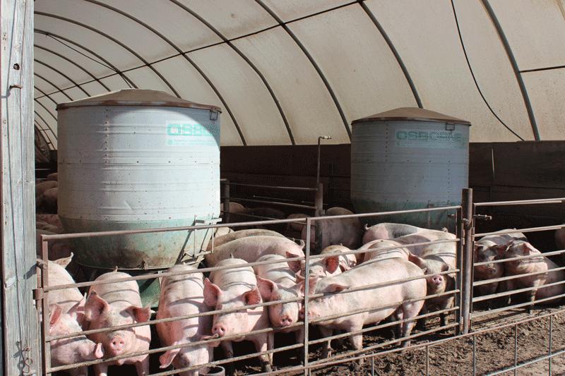 Big Wheel Outdoor Hog Feeders Osborne Livestock Equipment