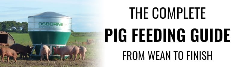 The Complete Pig Feeding Guide: From Wean to Finish