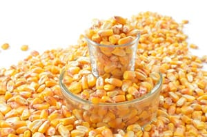 Corn Feed