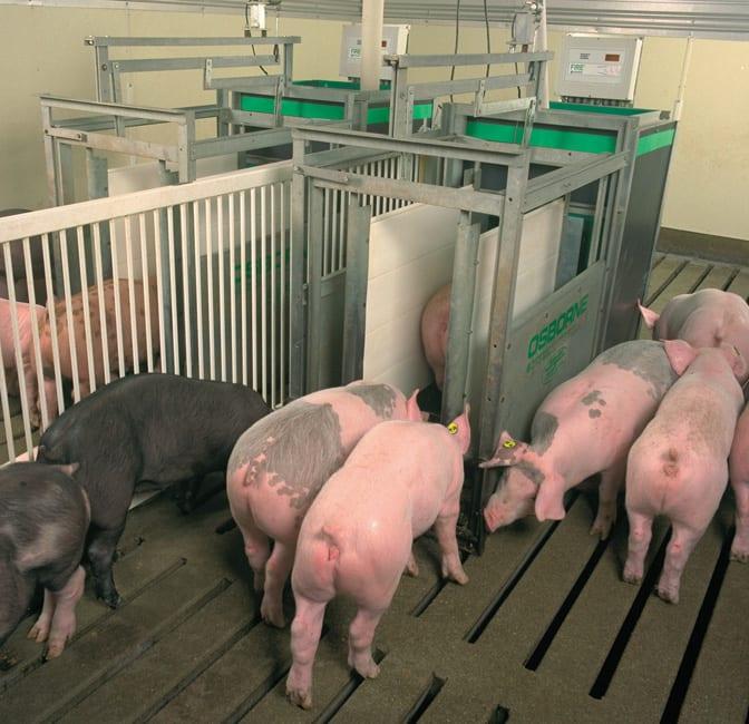 pig performance testing