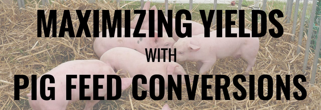 Pig Feed Conversions