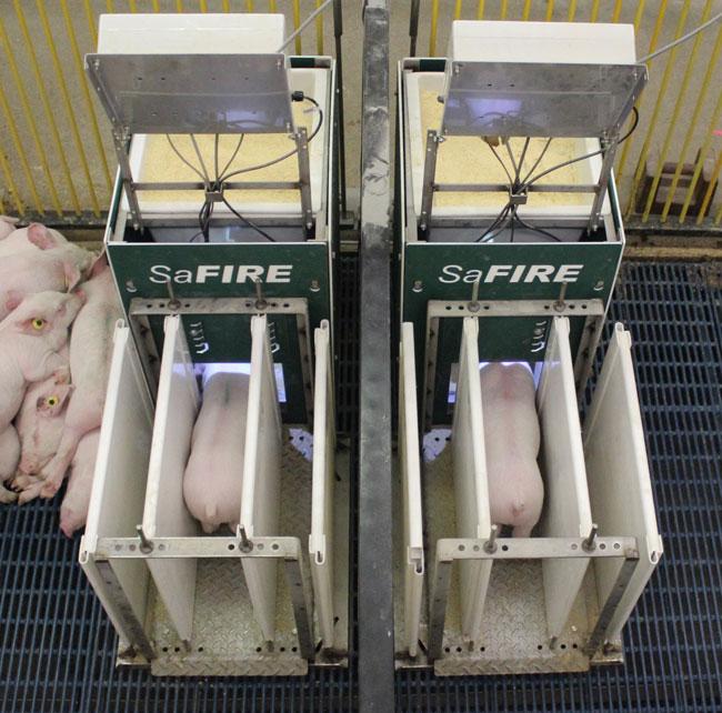 SaFIRE Feeder